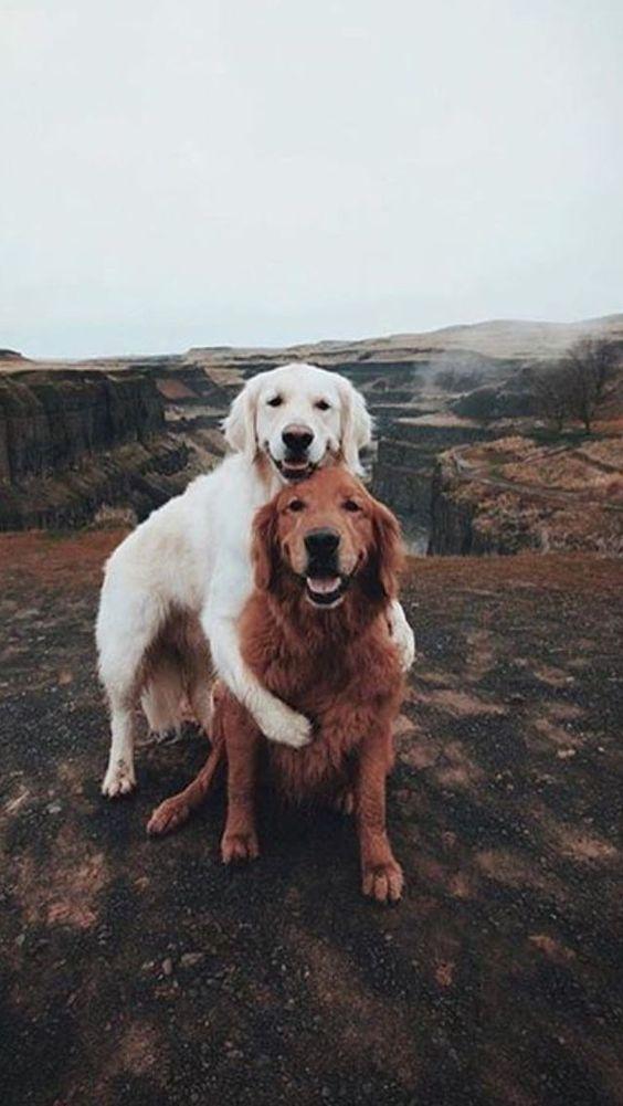 Dogs GOLDENDOODLE LANE Plastic Street Signs GOLDEN RETRIEVER POODLE