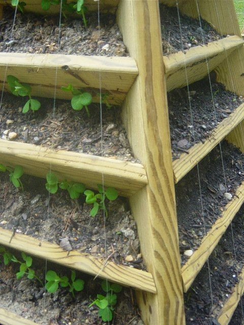 A few nails and fishing line can be used as a trellis for climbing plants
