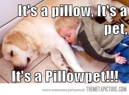 Real pillowpet…