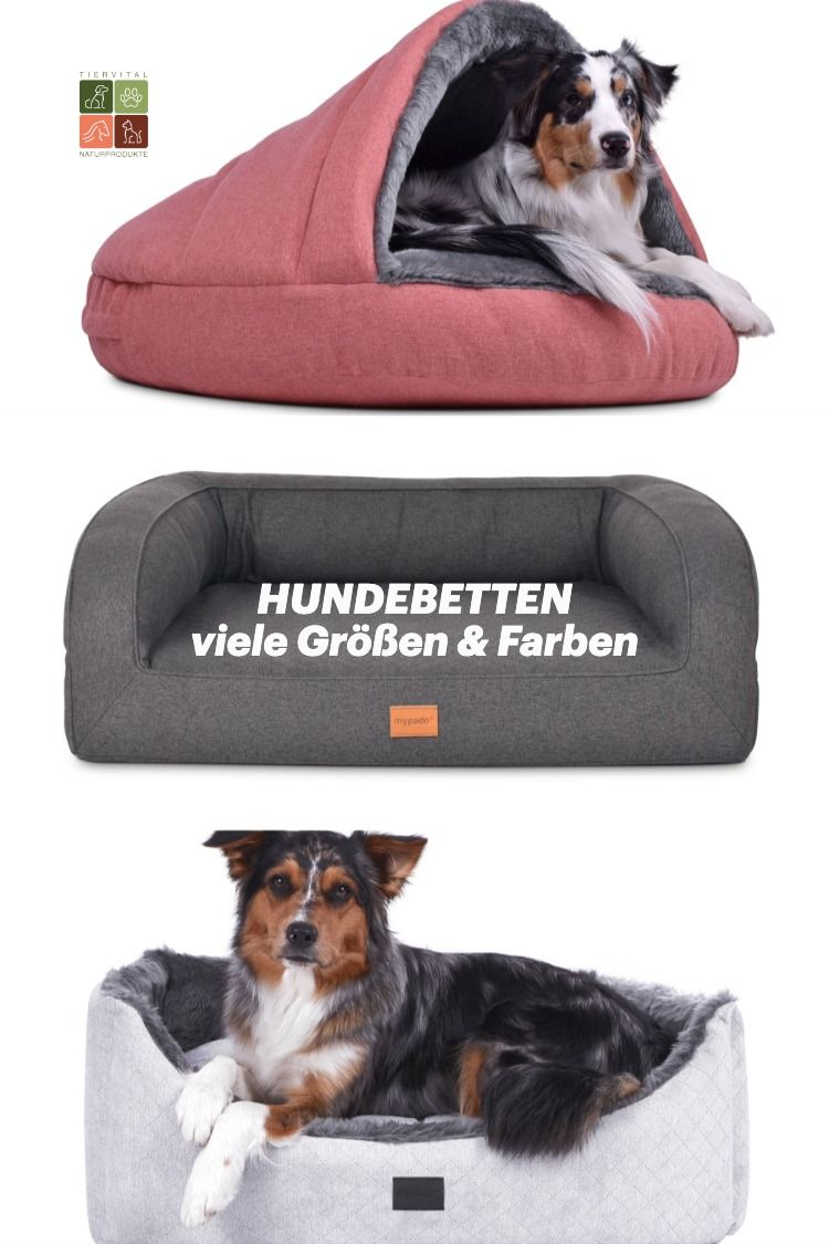 Orthopadische Hundebetten Orthopadische Hundekissen Und Orthopadische Hundematten In 2020 Hunde Kissen Orthopadisches Hundebett Hunde Bett