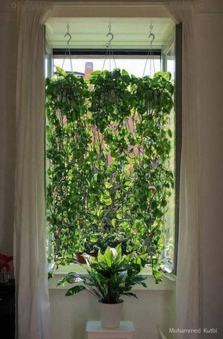 Photo of New Plants Indoor Apartment Design Window Ideas