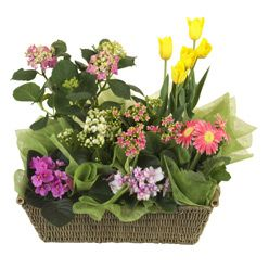#flowers #australia #gifts #hamper -   Sometimes you know that your recipient would just love a range of small to medium sized flowering plants. And most of them as well as lasing for a long time can be re-planted. This seasonal selection of a variet