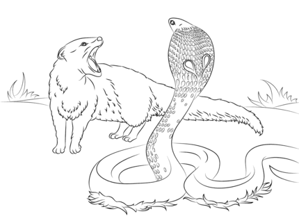 rikki tikki tavi science cobra vs mongoose coloring page