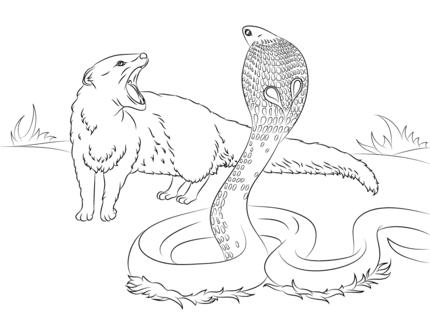 rikki tikki tavi science cobra vs mongoose coloring page