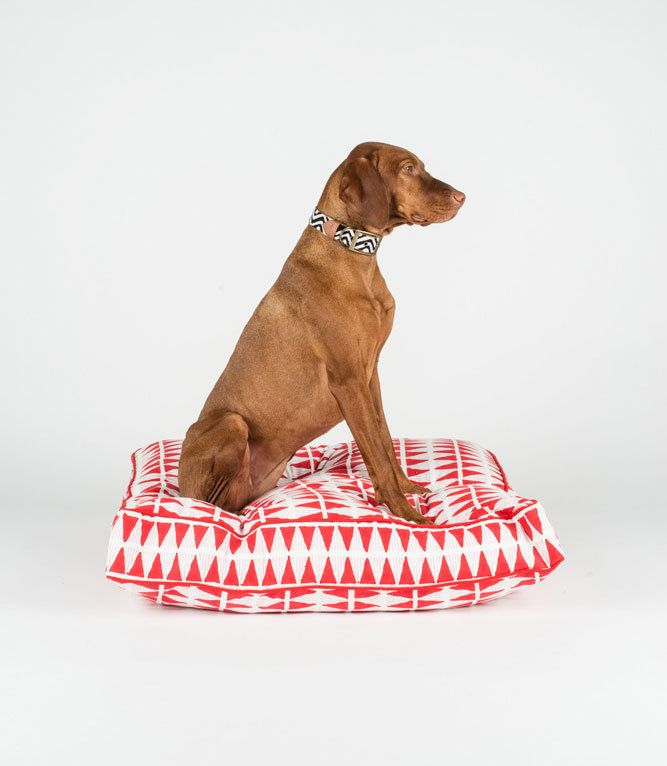 Artisanal Bohemian Beds And Collars From Fillydog Dog Milk Dog
