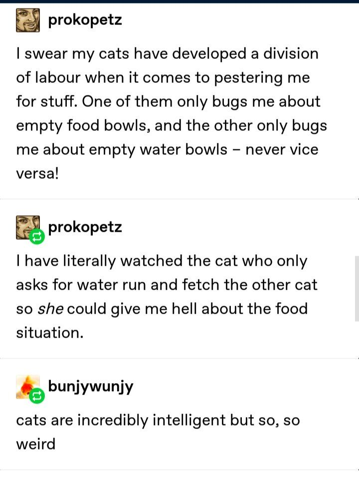 DOWN WITH THE CAT UNION