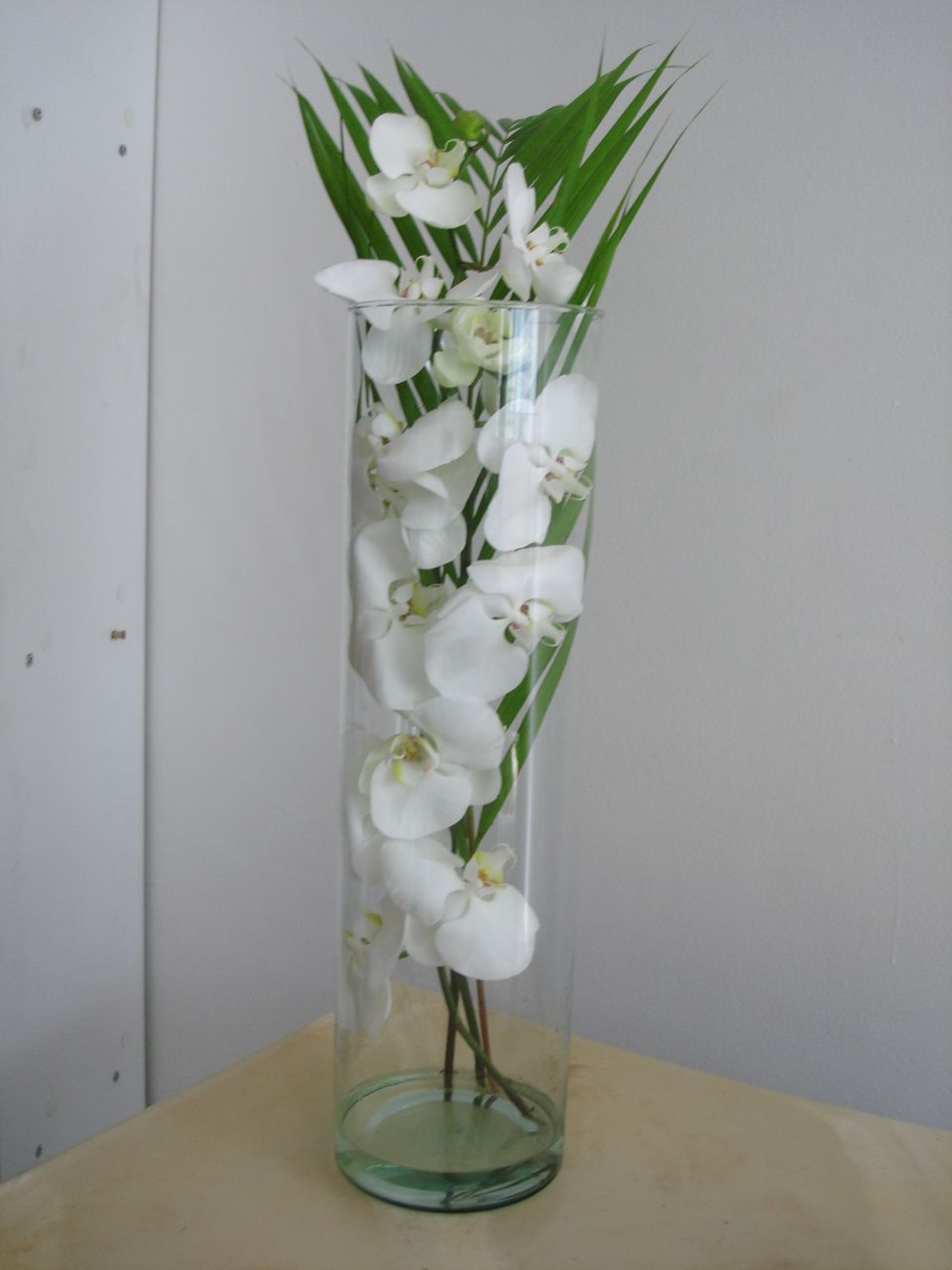 41- Orquídea Phalaenopsis com folhagem