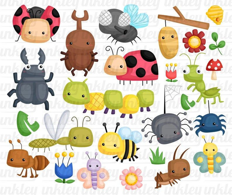 Cute Bugs Clipart Bugs Types Clip Art Bug And Insect Etsy Clip Art Bugs And Insects Bug Type