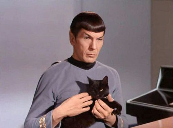 Spock and cat.