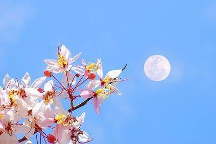Jardiner avec la lune   Calendrier lunaire, Lune et Jardinage