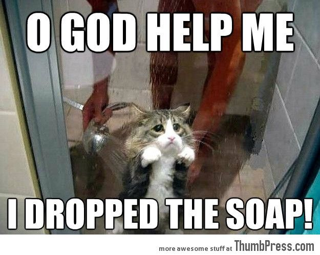 Funniest Animal Memes In The World : Most funny animal memes and humor pics funny animal memes and