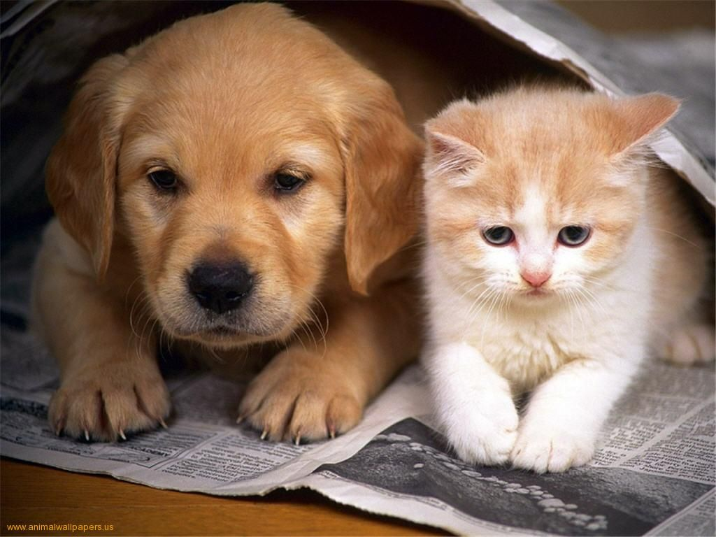 Newspaper Cute Puppies And Kittens Cute Cats And Dogs Kittens And Puppies