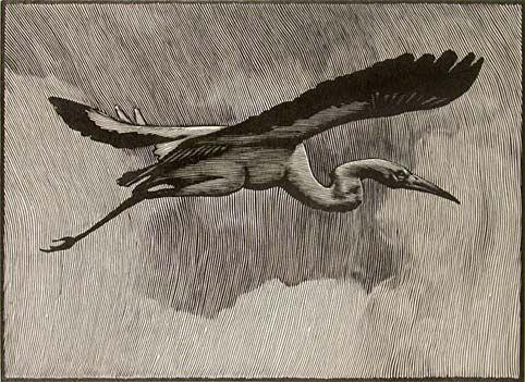 Stork in the Heavens, Barry Moser.