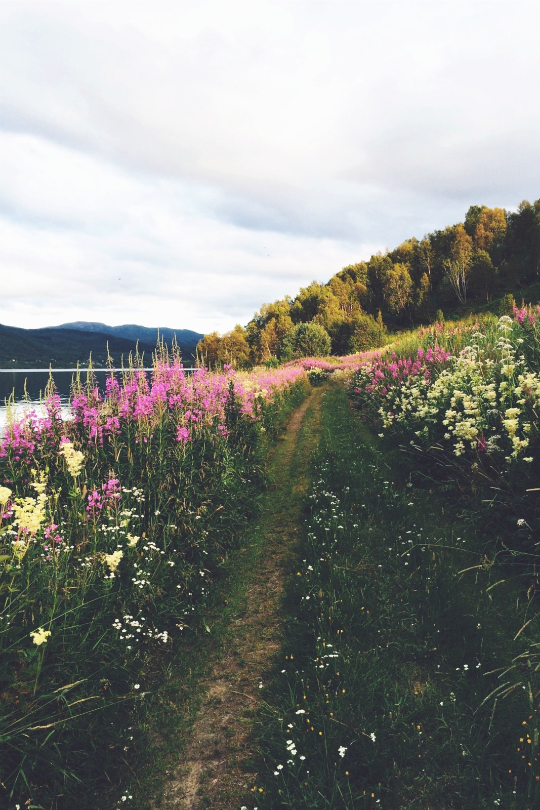 Nature - Natur #photoscenery