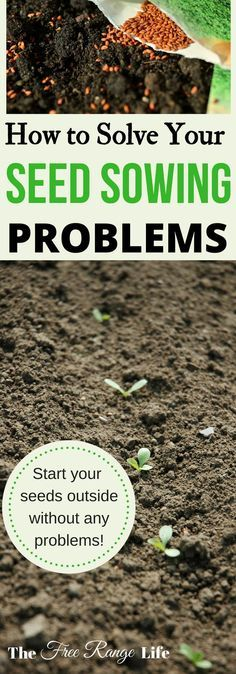 Learn how to direct sow your seeds in your garden and what the most common seed sowing problems are- and how to fix them!