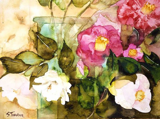 Camelias | Shirley Trevena #watercolor #illustration