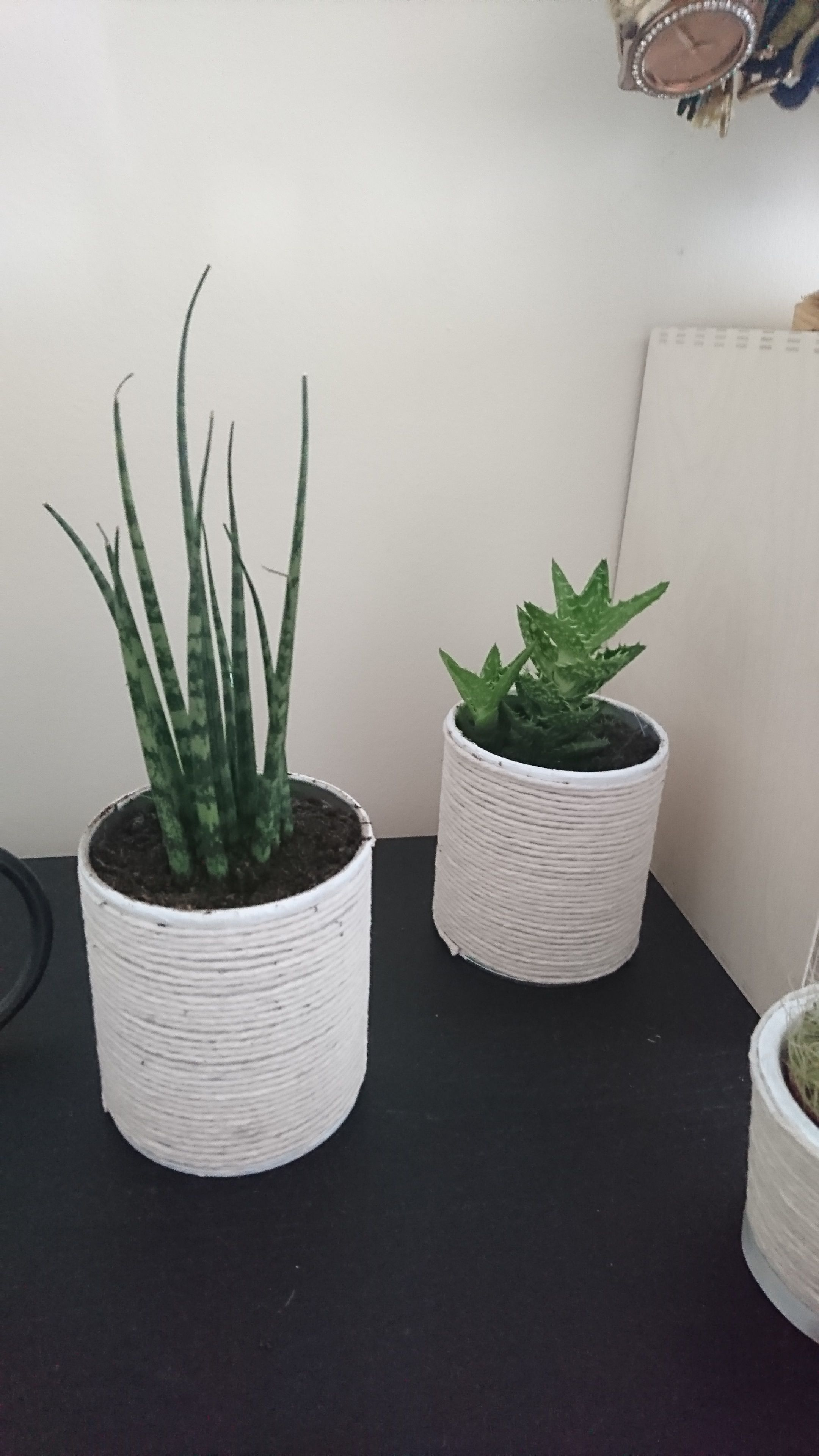 Plant Pots Made Out Of Small Pringles Cans Painted White And With Glue You Put String Around It Done