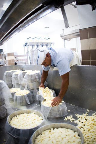 Bravo Farms Cheese Factory! See how cheese is made.