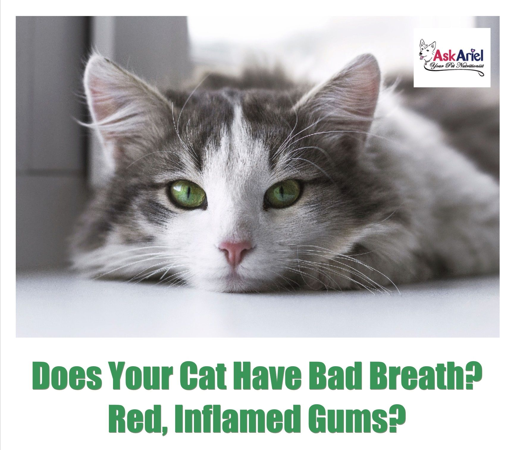 Does your kitty have bad breath red gums or drooling