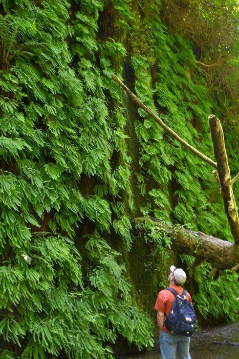 Quarry Shade Garden At Bon Air Park: Fern Canyon, Redwood National Park. Sigh, If Only...an