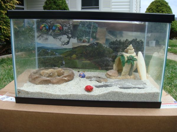 Hermit Crab Tank For Sale On Craigslist Hermit Crab Tank Hermit Crab Hermit