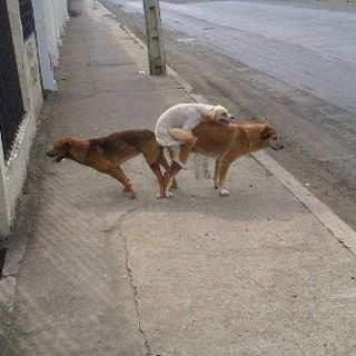 Triangulo Amoroso Best Funny Photos Funny Photos Funny Animals