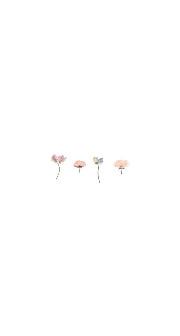 ✨𝚃𝚊𝚙𝚎𝚝𝚢✨   Simple wallpapers, Cute simple wallpapers ...