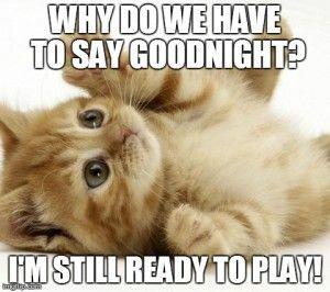 75 Hilarious Good Night Memes Images Pics Good Night Funny Good Night Meme Good Night Cat