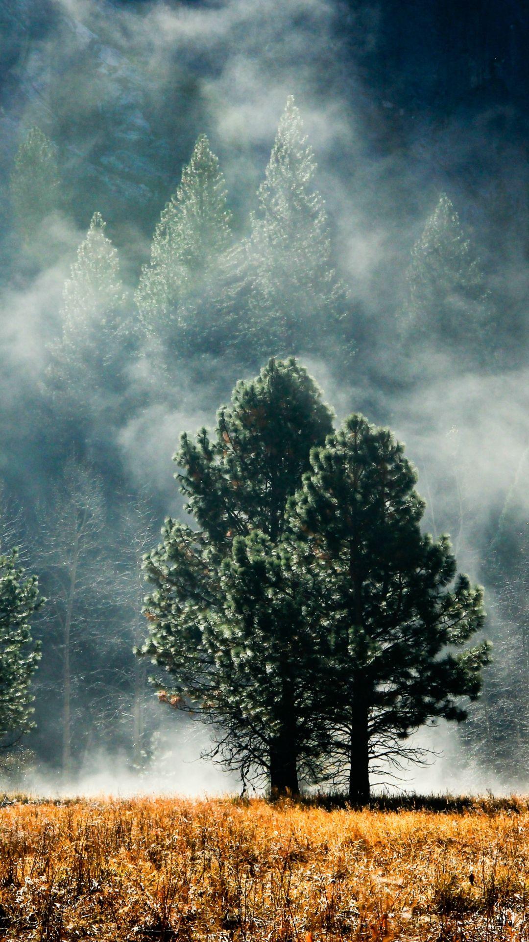 1080x1920 Wallpaper Fog Pines Grass Faded Colors Nature Iphone Wallpaper Hd Nature Wallpapers Nature Wallpaper