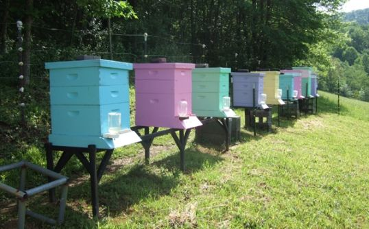 Bee Keeping   Love the colors   beehive boxes, with attached water sources   I need to continue going to the bee keeper meetings - Fun