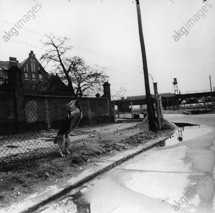 akg-images -Berlin Wall / Watchdog / Photo / 1964Berlin, Sector border – Berlin Wall. – Border fortifications with watchdog near the Charité hospital in East Berlin with the Humboldt harbour in background.  Photo taken by a GDR border guard on 22 April 1964.
