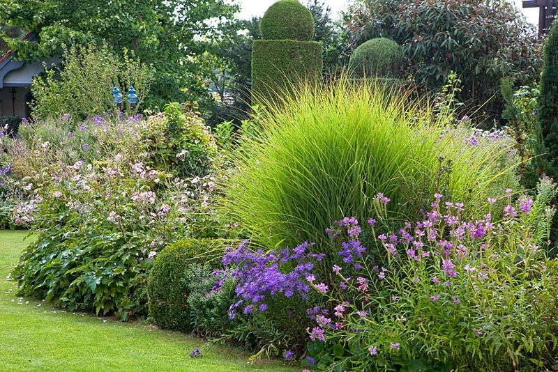 perennial flower bed with ornamental grass and topiary