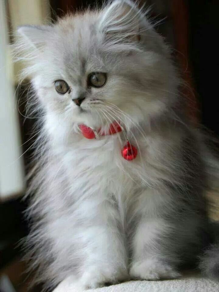 I Can Look At Cute Kittens For A Long Time Kittens Cutest Cute Cats Beautiful Cats