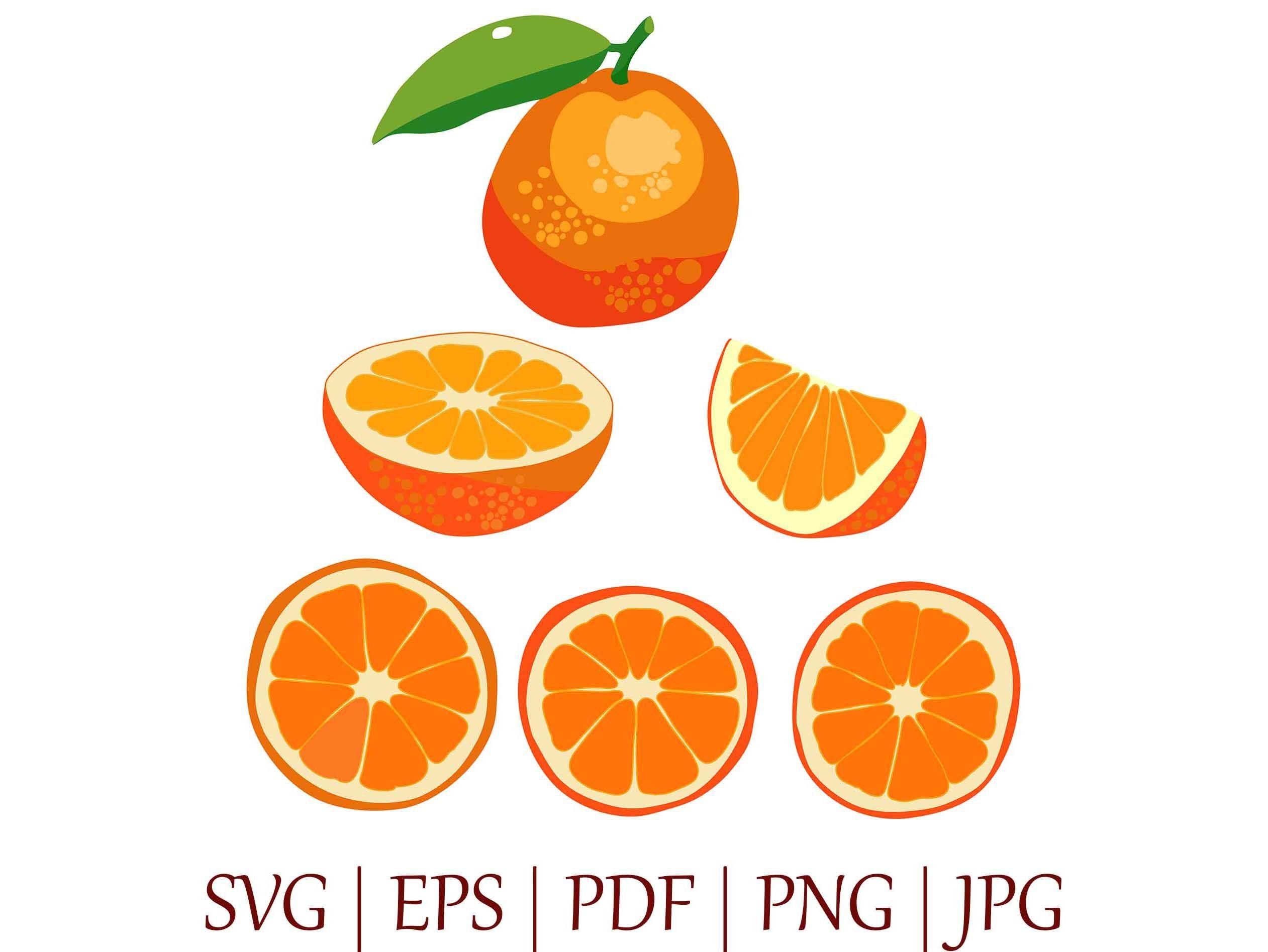 Bright Orange Set Of Vector Illustrations Clipart Slice Etsy Fruit Vector Pattern Design Drawing Fruit Illustration