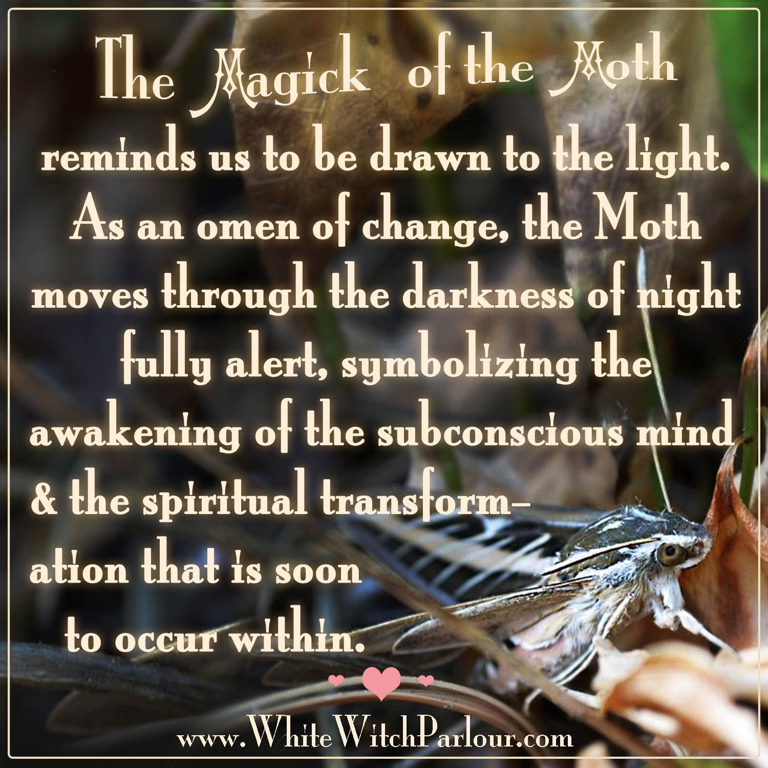 Moth symbolism magick transformation witch wisdom animal moth symbolism magick transformation witch wisdom animal spirit buycottarizona