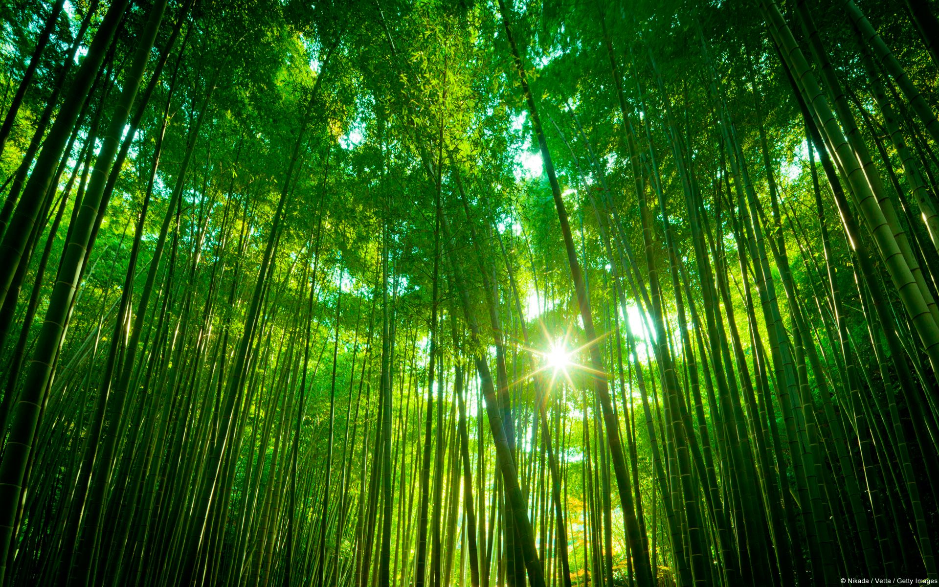 Wallpapers Windows Help Bamboo Forest Bamboo Forest Japan Backgrounds Desktop