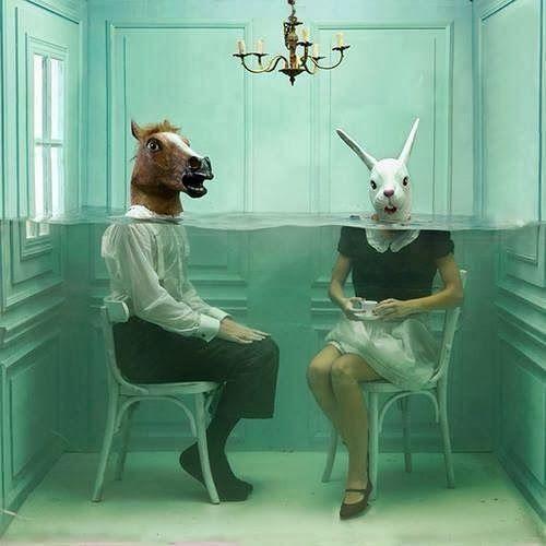 Dias Cães: O coelho e o cavalo