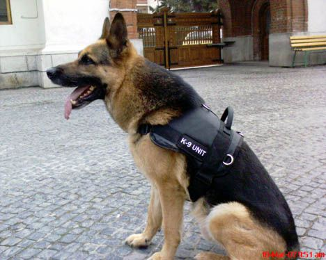 Service Dog Active Fit Harness Service Dogs Dogs Police