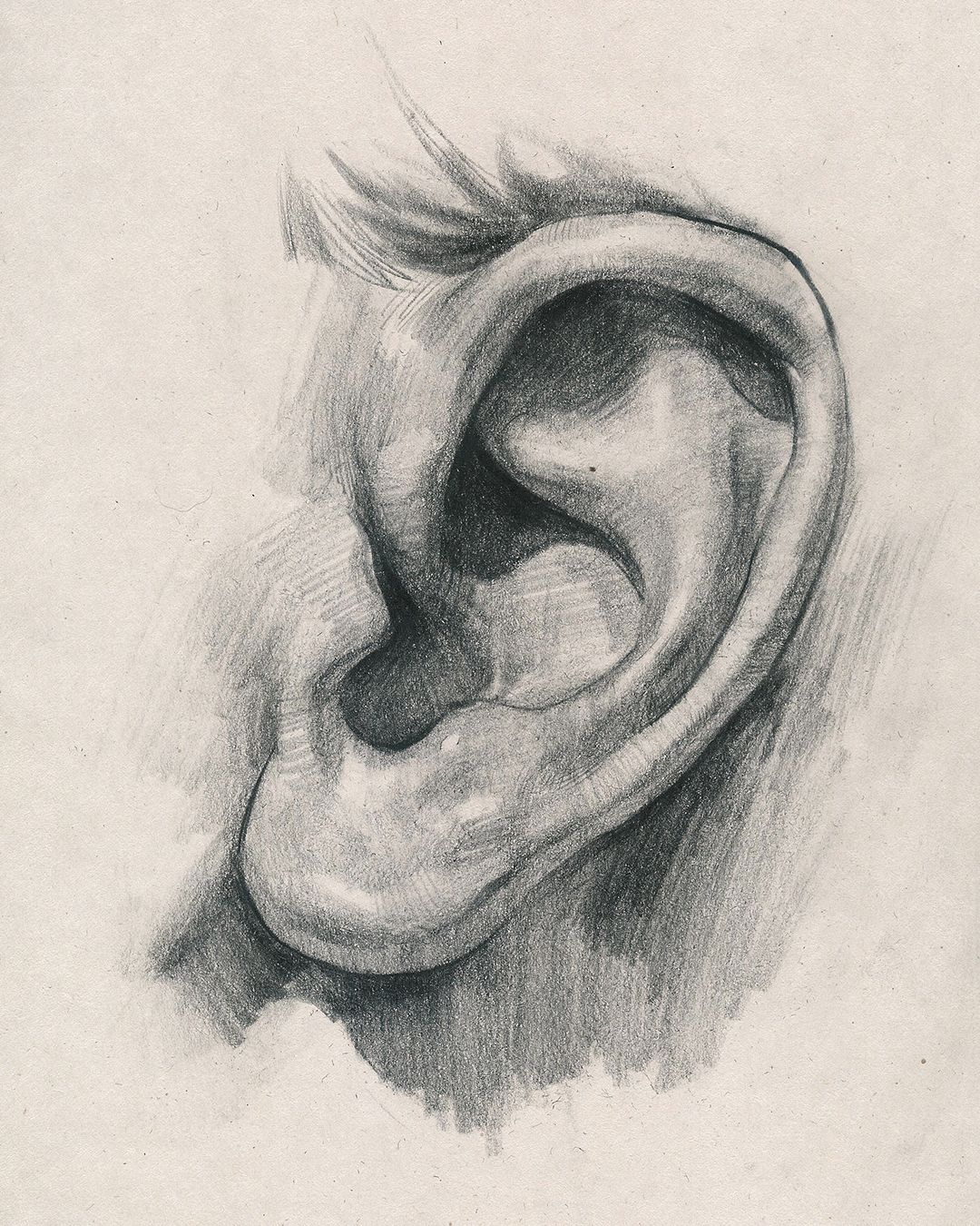 How To Draw Ears Anatomy And Structure Portrait Drawing Anatomy Art Art Drawings Sketches