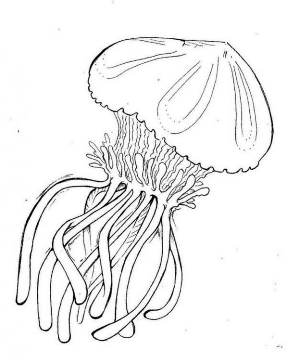 A Jellyfish Like A Floating Mushroom Coloring Page | mushy coloring ...