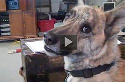 Ultimate Dog Tease This Funny Talking Canine Is The Barker