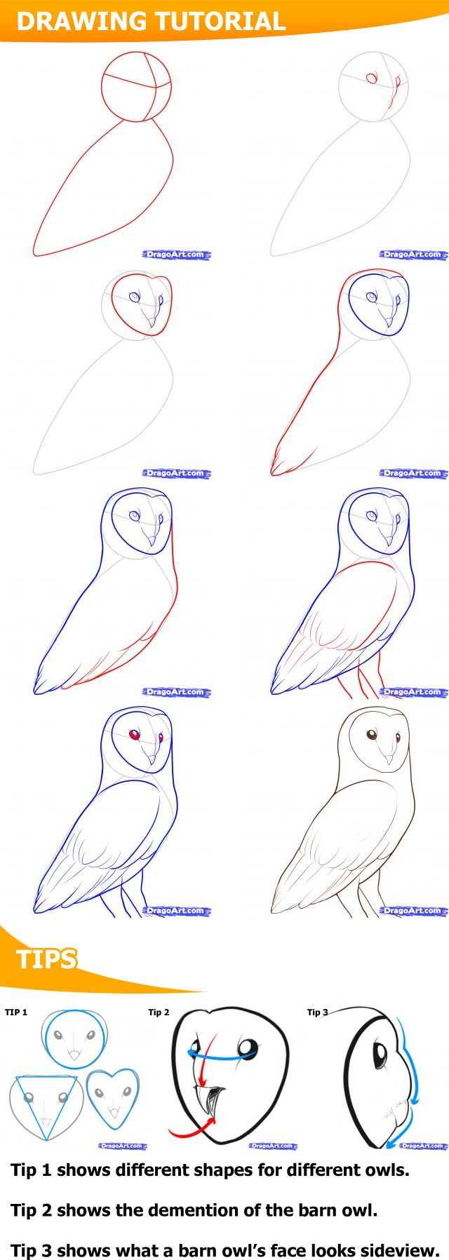 How To Draw A Barn Owl #owls #howto