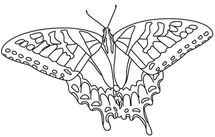 Tiger Swallowtail Butterfly Coloring Page Car Tuning Butterfly Coloring Page Animal Coloring Pages Butterfly Printable