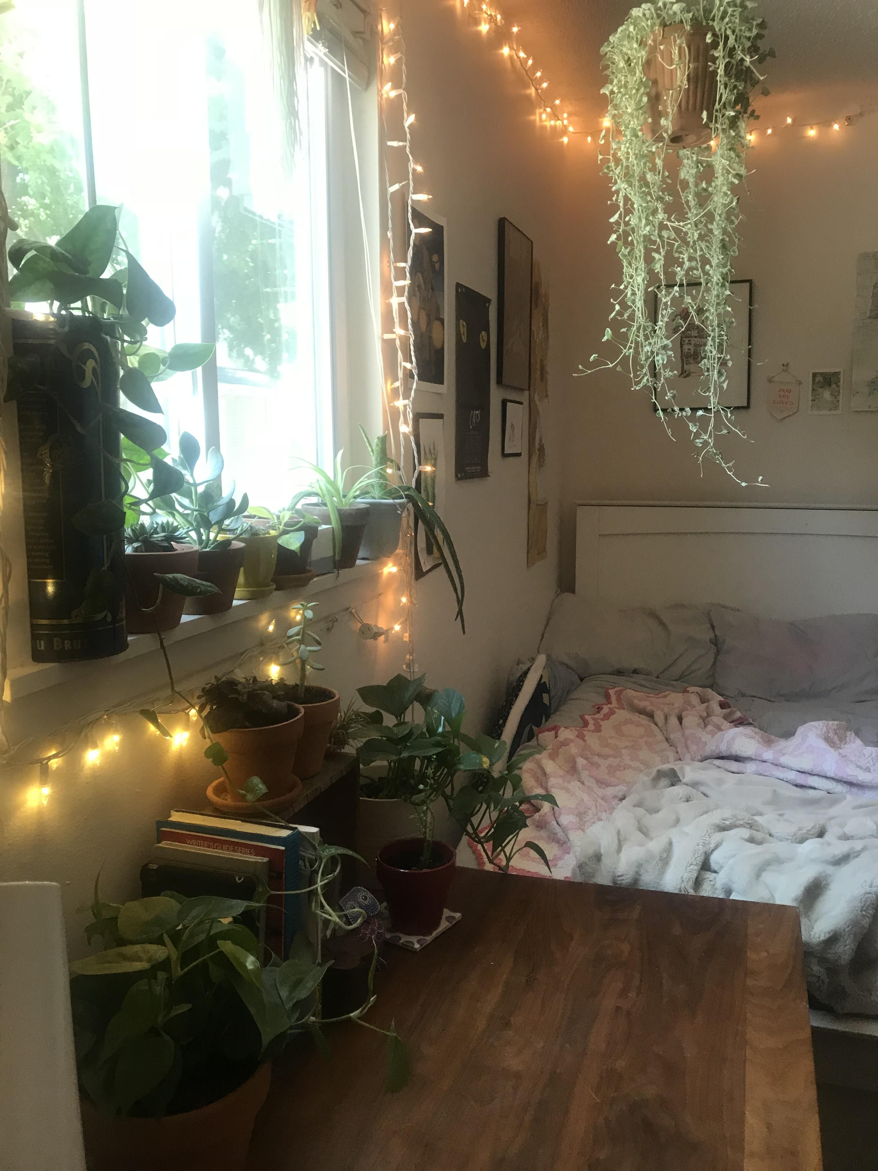 After Months And Months Of Spending Too Much Money On Plants Ive