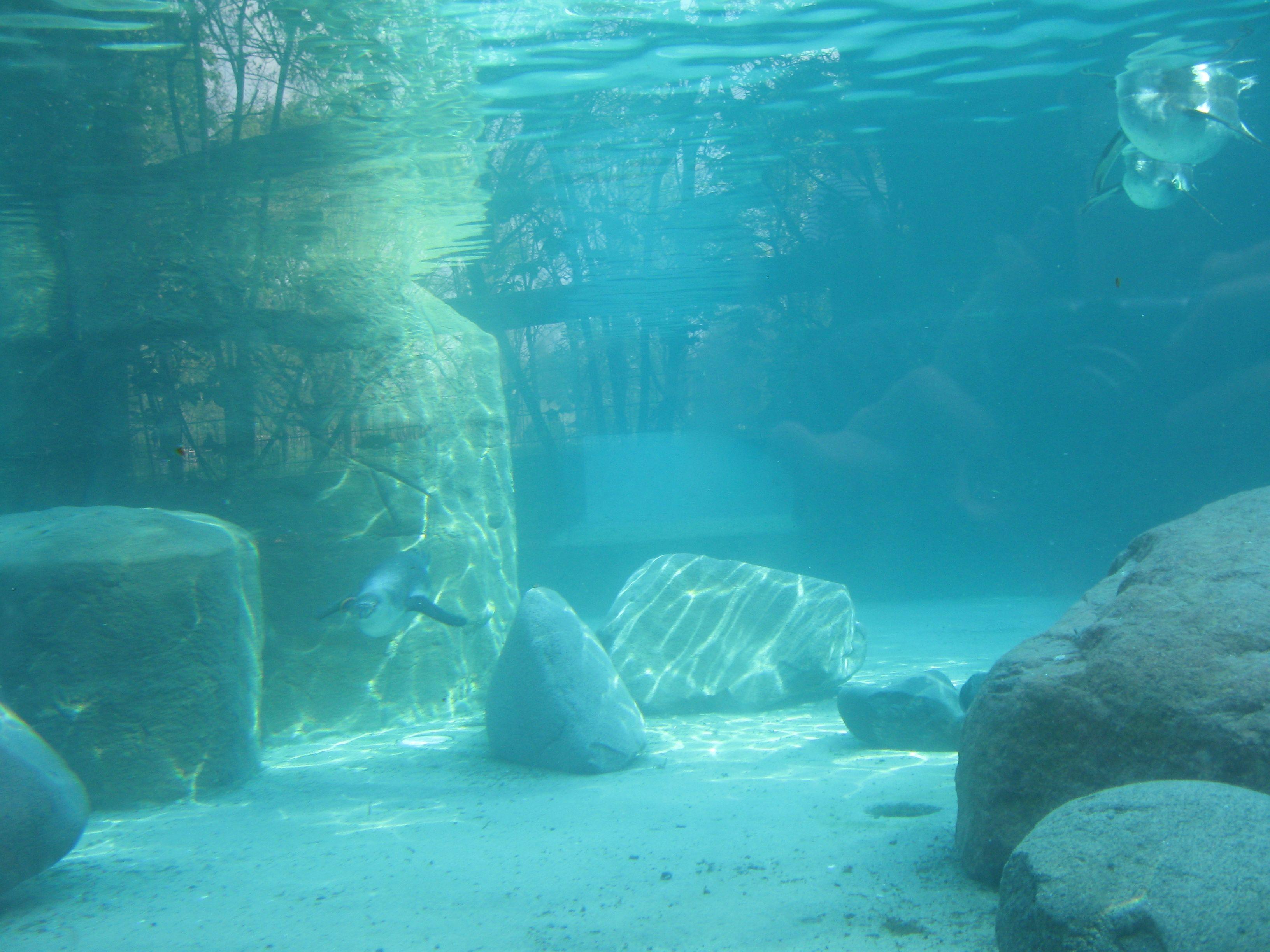 Pinguins under water