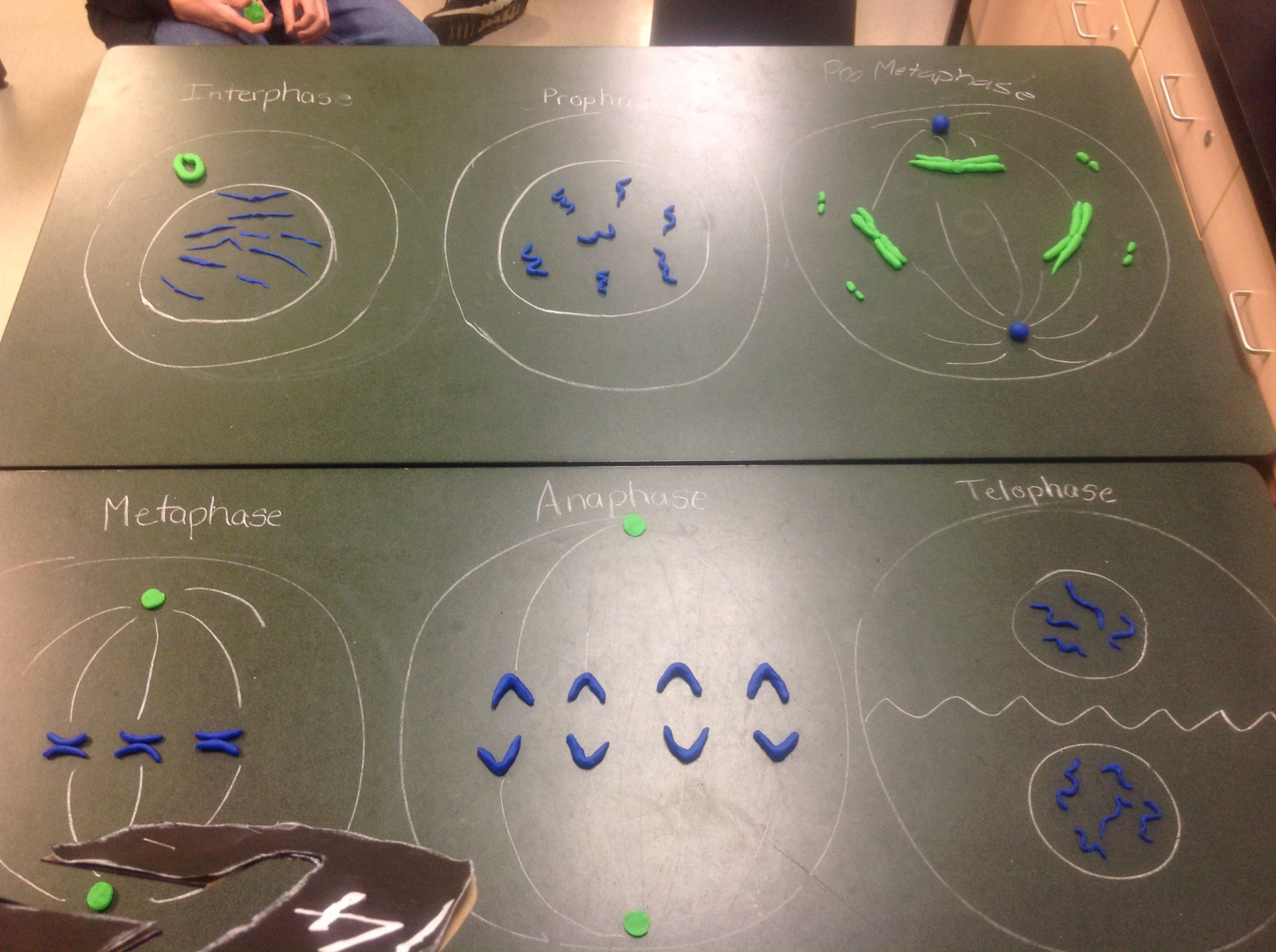 Mitosis with playdoh Play doh, Mitosis, Play