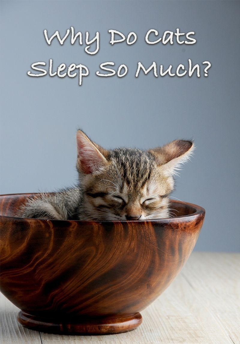 Why Is My Cat Sleeping So Much? By Cat sleeping