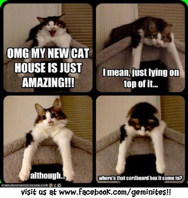 My new cat house is amazing...