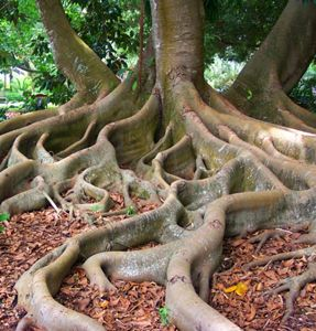 Grounding yourself is a key to spiritual balance and clarity. watch for my upcoming grounding video  brought to you by www.lightworkersgifts.com