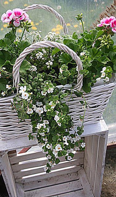 Kompozycje Kwiatowe Ba Balkon Taras I Do Ogrodu Cz 1 Window Box Flowers Container Gardening Flowers Container Flowers